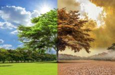 Học từ vựng tiếng Đức chủ đề môi trường