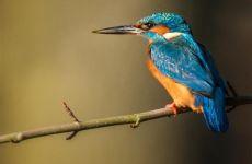 29 loài chim trong tiếng Đức